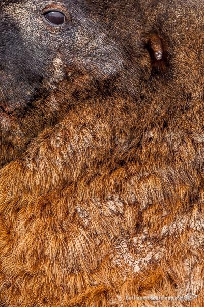 Fur_18